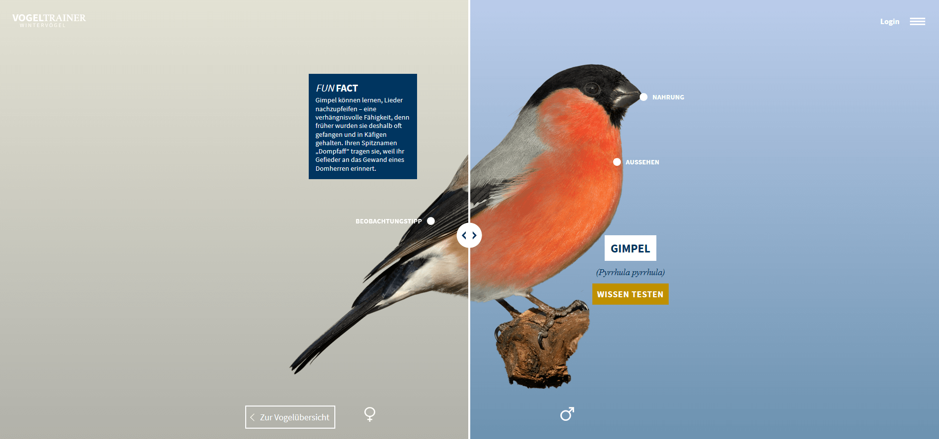 Vogelansicht Weibchen Maennchen