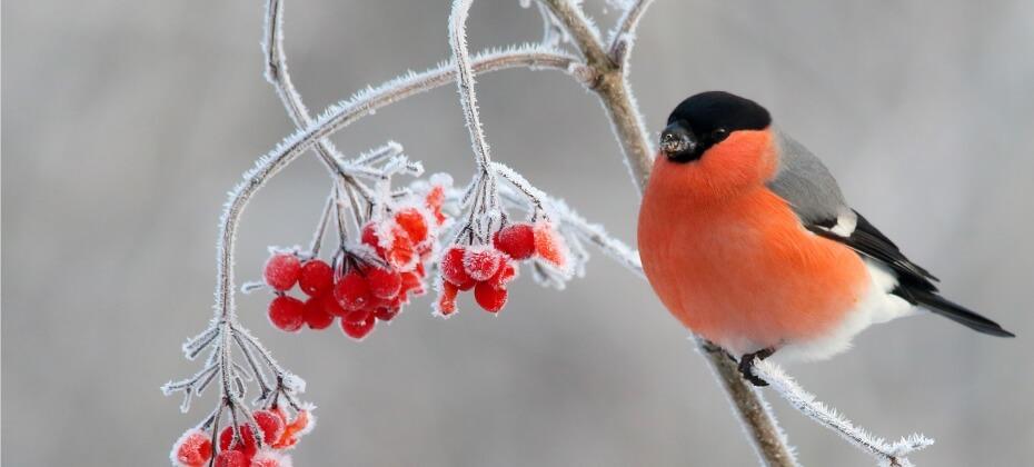 NABU Vogeltrainer Wintervögel