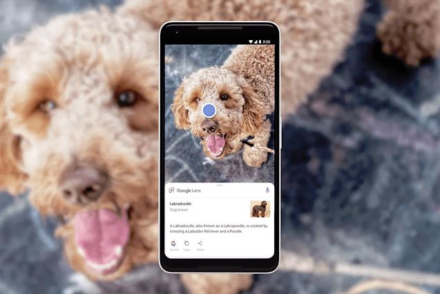 Google Lens identifiziert die Rasse des Hundes