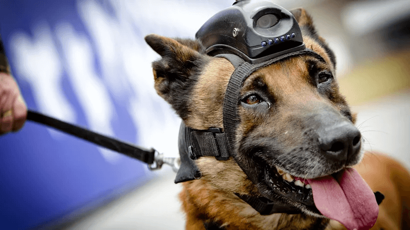 cyberdog ermittelt