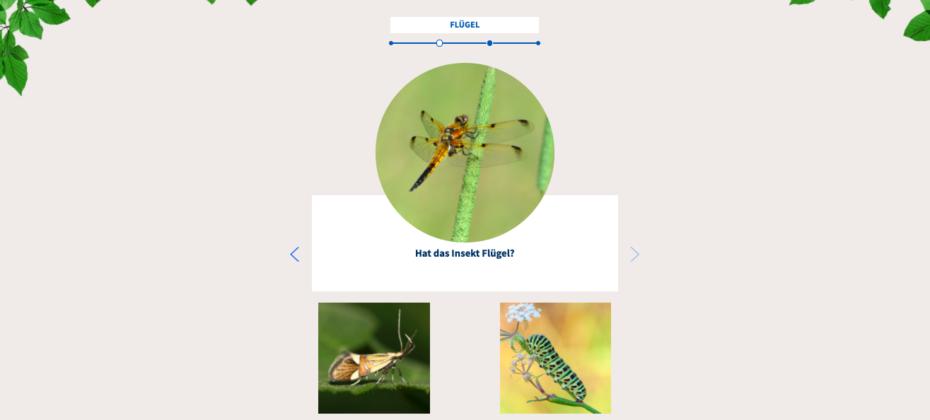 Screenshot des Qiuz aus dem Insektenbestimmungsschlüssel