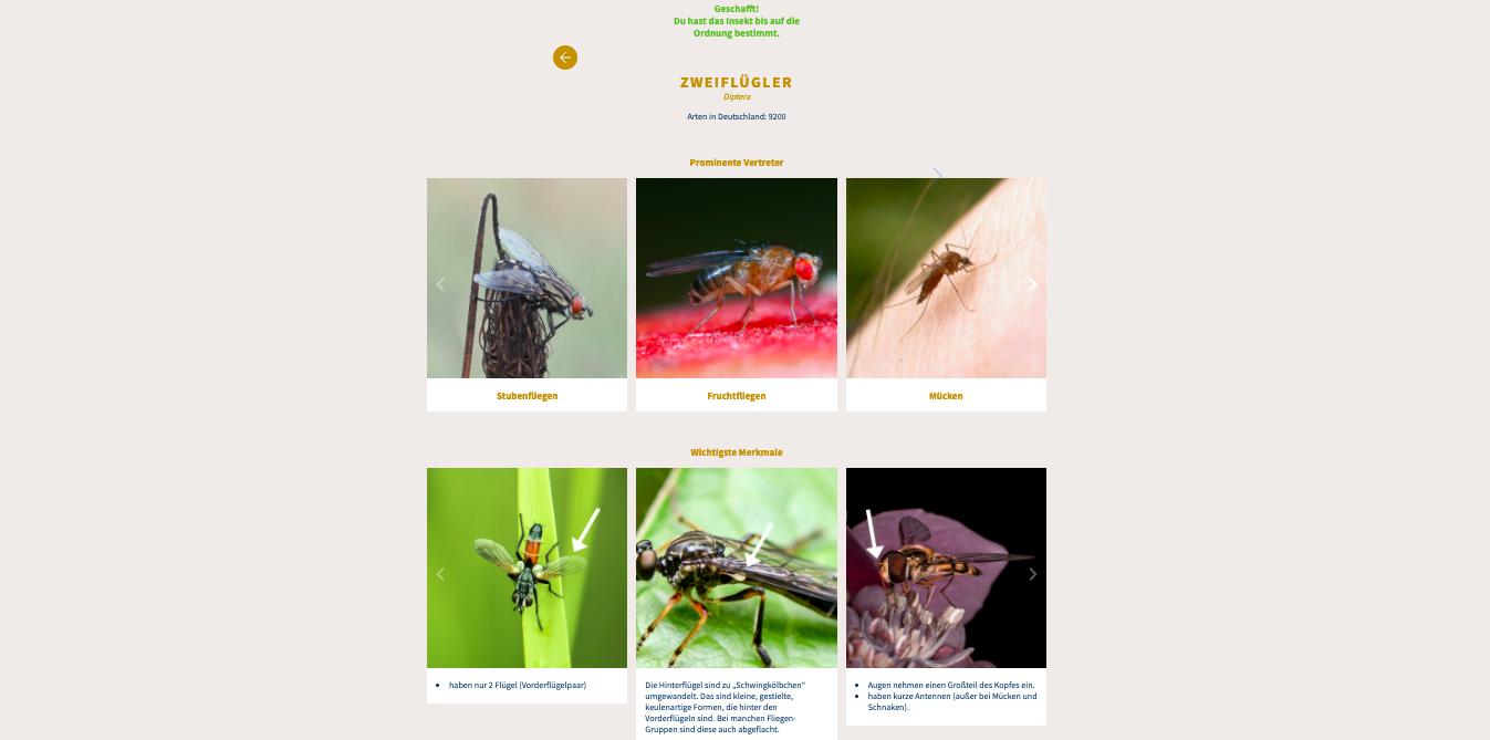 Screenshot des Insektenbestimmungsschlüssel mit einer Übersicht der Zweiflügler