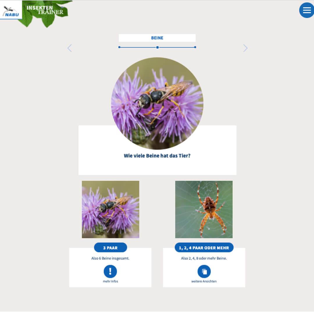 Screenshot aus dem Insektenbestimmungsschlüssel vom NABU